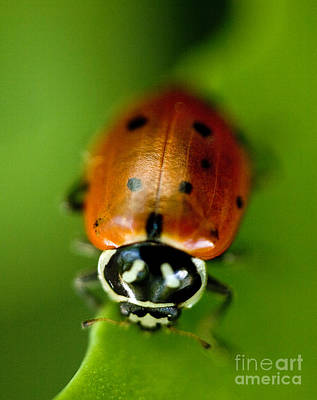 Ladybug On Green Poster by Iris Richardson