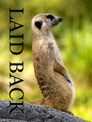 Laid Back Meerkat Phone Case Cut Poster by David Lee Thompson