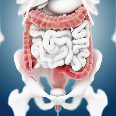 Large Intestine Poster by Springer Medizin