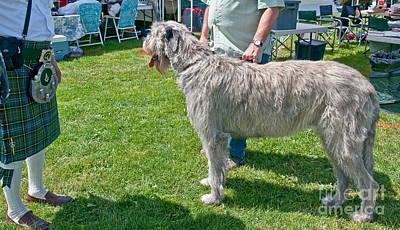 Large Irish Wolfhound Dog  Poster by Valerie Garner