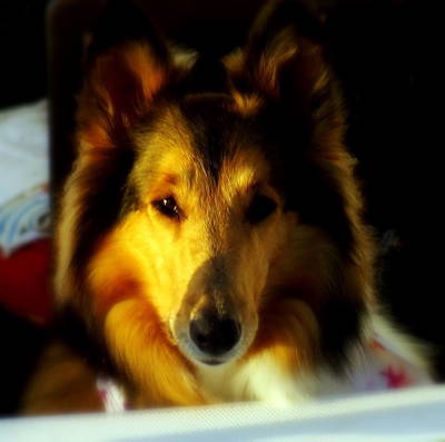 Lassie Come Home Poster by Karen Wiles
