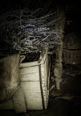 Lavandula Poster by Amy Weiss