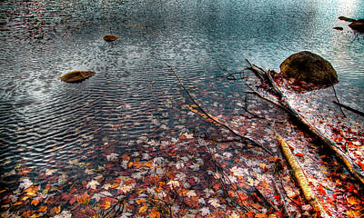 Leaves In The Lake Poster by David Patterson