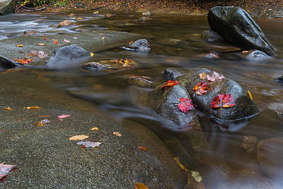 Leaves On The River Path Poster by Andres Leon