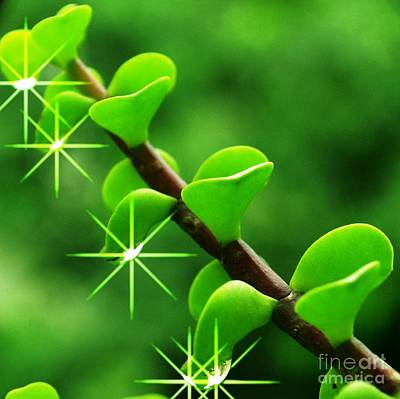 Leaves With Stars Poster by Jyoti Vats