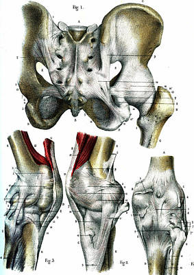 Leg Joints Poster by Collection Abecasis
