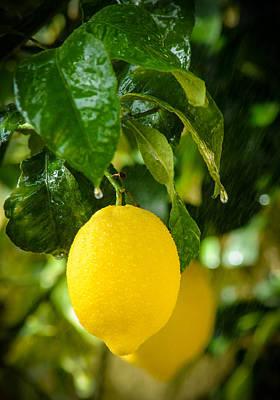 Lemon Down The Rain Poster by Tetyana Kokhanets