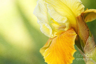 Lemon Lime Poster by Beve Brown-Clark Photography