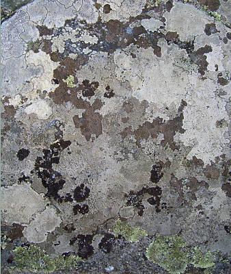 Lichen 12 Poster by Robert Johnson