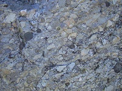 Lichen 14 Poster by Robert Johnson