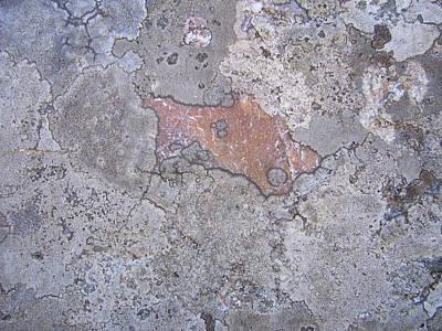 Lichen 3 Poster by Robert Johnson