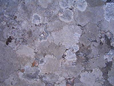 Lichen 4 Poster by Robert Johnson