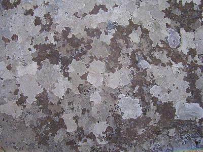 Lichen 6 Poster by Robert Johnson