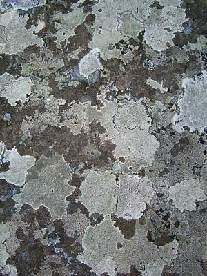 Lichen 7 Poster by Robert Johnson
