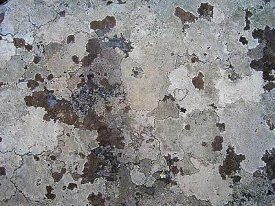 Lichen 9 Poster by Robert Johnson