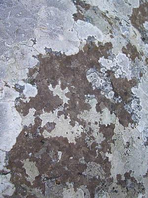 Lichens 10 Poster by Robert Johnson
