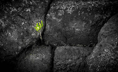 Life Finds A Way Poster by Marvin Spates