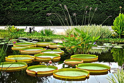 Lily Pad Garden Poster by Frozen in Time Fine Art Photography