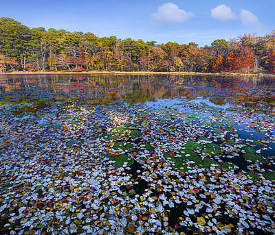 Lily Pads And Autumn Leaves Poster by Tim Fitzharris