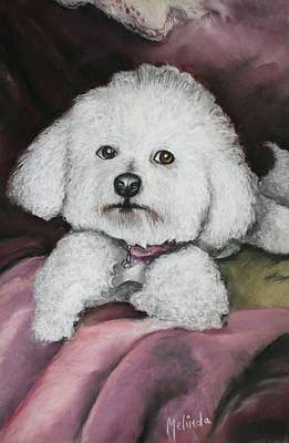 Lisa Bichon Pastel Poster by Melinda Saminski
