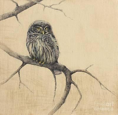 Little Owl Poster by Lori  McNee