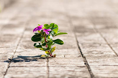 Little Plant Poster by Salvatore Pappalardo