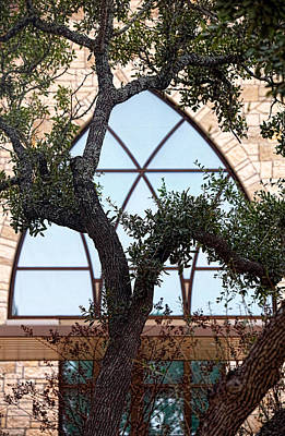 Live Oak In Front Of Church Window Poster by Linda Phelps