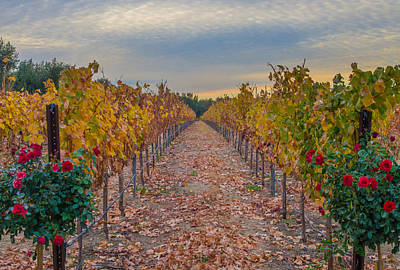 Livermore Vineyard Poster by Marc Crumpler
