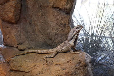 Lizard - National Aquarium In Baltimore Md - 12122 Poster by DC Photographer