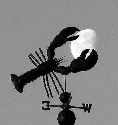 Lobster Over The Moon Poster by Donnie Freeman