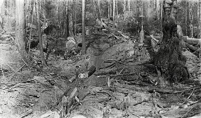 Logging A Redwood Hillside C. 1880 Poster by Daniel Hagerman