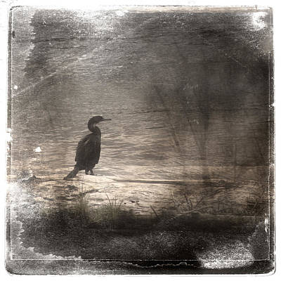 Lone Cormorant Poster by Carol Leigh