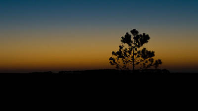 Lone Tree At Sunset Poster by Marco Oliveira