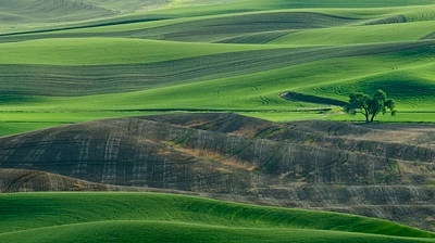 Lone Tree In The Palouse Poster by Don Schwartz