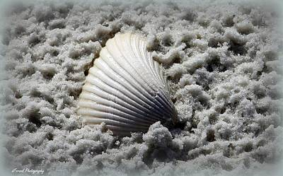 Lonely Shell Poster by Debra Forand
