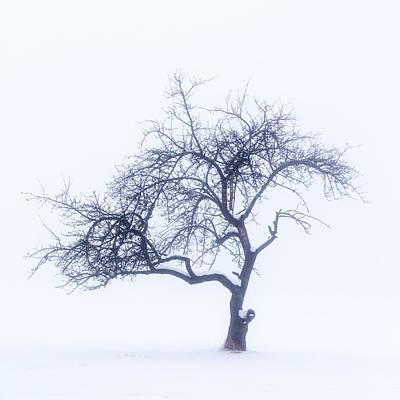 Lonely Tree In The Fog Poster by Aldona Pivoriene