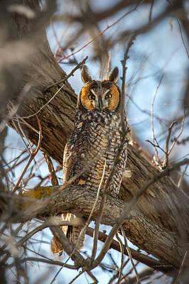 Long-eared Owl 3 Poster by Leland D Howard