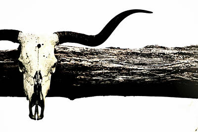 Longhorn Skull Poster by Chastity Hoff