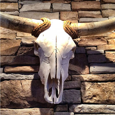 Longhorn Skull Poster by Patricia Januszkiewicz