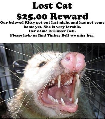 Lost Cat Cash Reward Poster by Michael Ledray