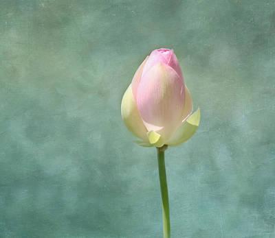 Lotus Flower Bud Poster by Kim Hojnacki