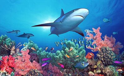 Low Angle View Of A Shark Swimming Poster by Panoramic Images