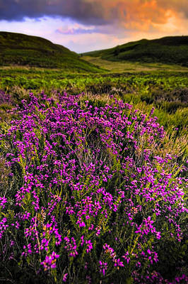Lucky Heather Poster by Meirion Matthias