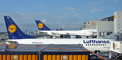 Lufthansa Birds At Frankfurt Airport Poster by Ausra Huntington nee Paulauskaite