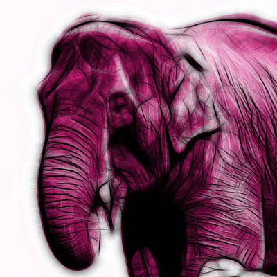 Magenta Elephant 3374 - F - S Poster by James Ahn