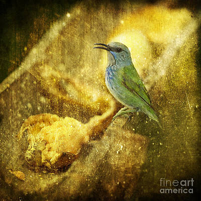 Magic At The Feeder... Poster by Nina Stavlund