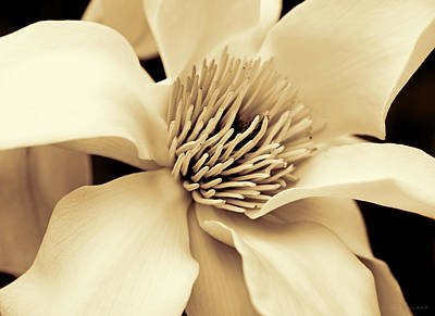 Magnolia Flower In Sepia Four Poster by Jennie Marie Schell
