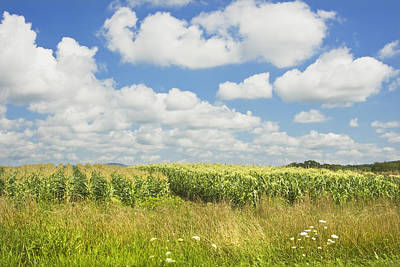 Maine Corn Field In Summer Photo Print Poster by Keith Webber Jr