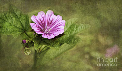Mallow Hollyhock Poster by Lena Auxier