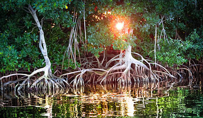 Mangrove Sunset Poster by Karen Wiles